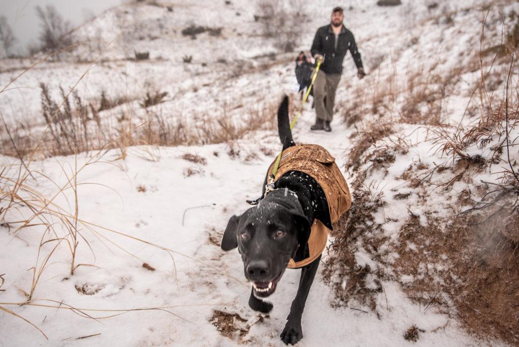 Dog Friendly Winter Hikes Empire Chamber